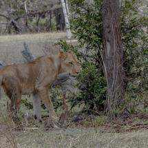 tansania2011-11