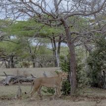 tansania2011-12