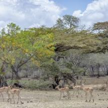 tansania2011-6